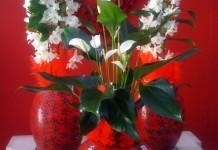 Nuovi look per le piante in vaso