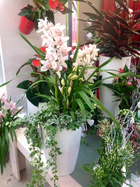 Composizioni Piante Da Interno: Arredare con le piante da interno foto design...